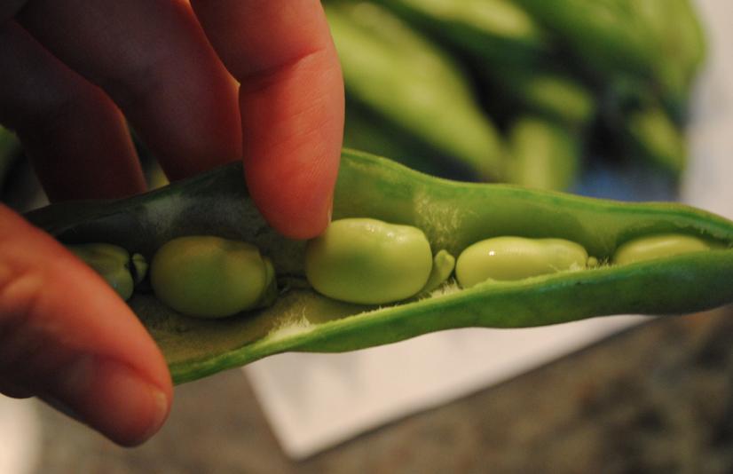beans in pod.
