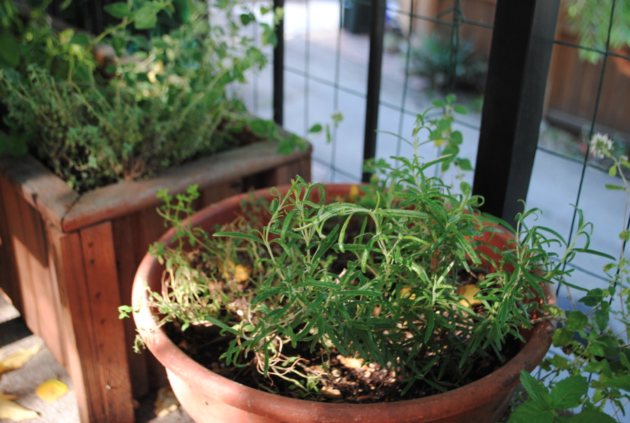 Fresh thyme. Conveniently located outside the kitchen door.