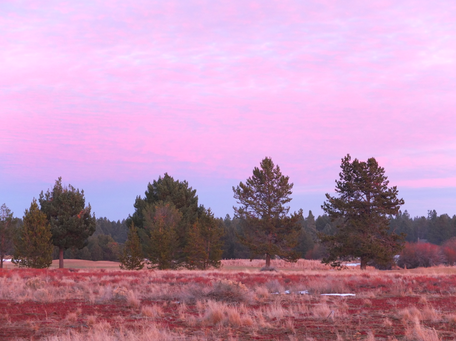 The area around the Sunriver resort is usually covered with snow this time of year.  At least we got to enjoy the high desert scenery.