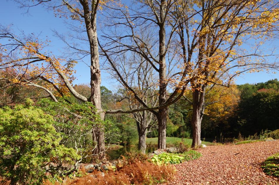 Blanket of leaves.