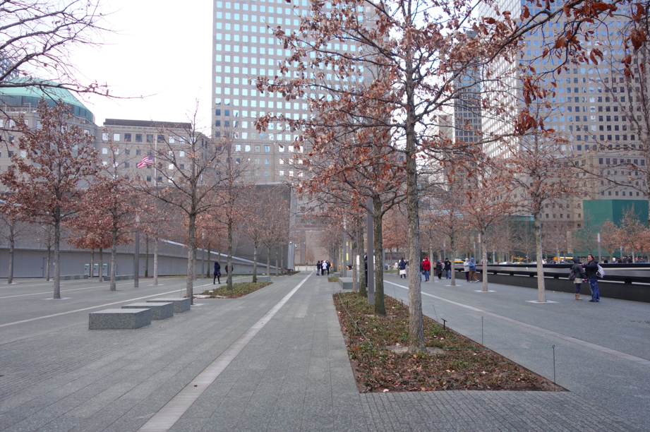 The plaza and its trees.