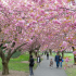 Spring Activities in NYC 2015