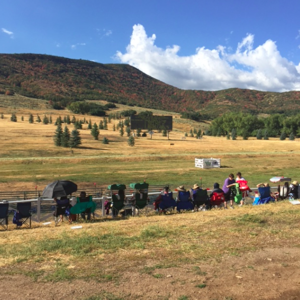 Sheep herding competition.