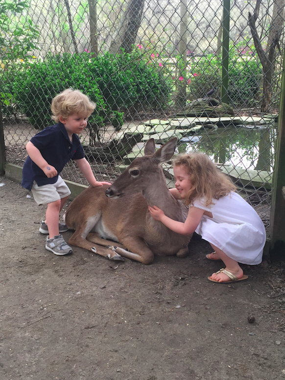 There is a ton for kids to do in Charleston, SC, as well. Here at Magnolia Plantation and Gardens, the kids got to play with deer and other animals, and take train and boat rides.