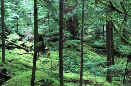 Computer screen savers are made from Oregon forests.