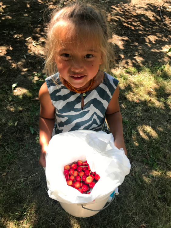 Berry picking! Yesterday, we went to a farm and picked cherries and blueberries. It was an incredibly warm day outside, so it was tiring but Tusia did NOT want to leave she was having so much fun.