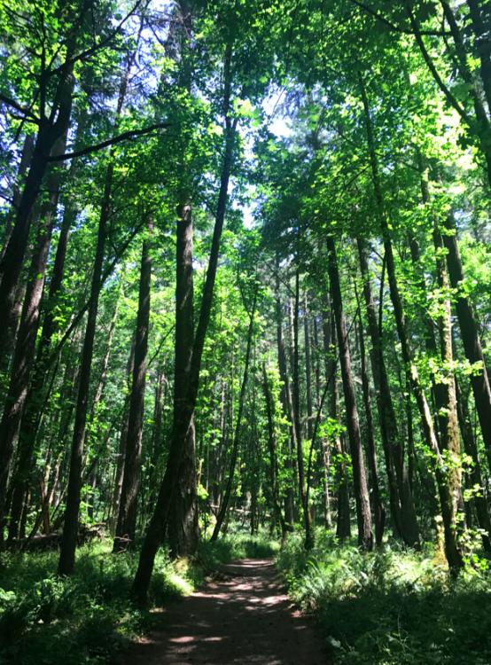 Glorious trees.