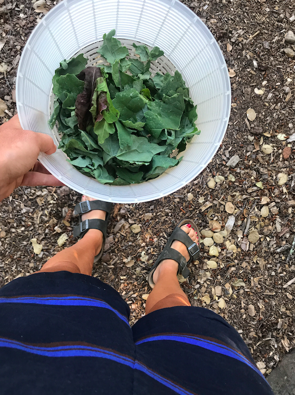 All the veggies for the meals came from the backyard. We would literally just go with a basket and pick what we wanted. I made a simple kale salad, that apparently people loved and requested the next day (who knew?)