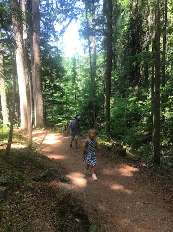A big ol forest = Oregon
