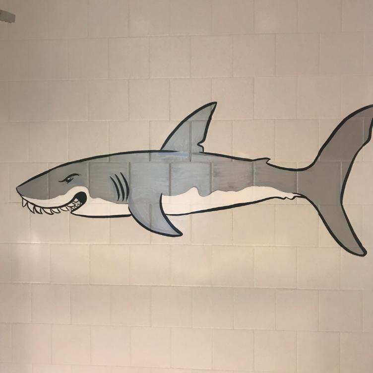 Mr. Sharkie!