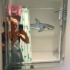 Bathroom Shark Painting