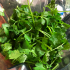Cilantro Jalapeno Vegan Pesto